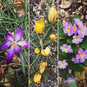 garden 2018 purple